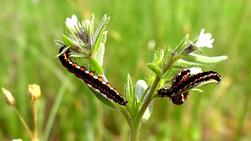 Caterpillars eat fresh grass with flowers in the meadow