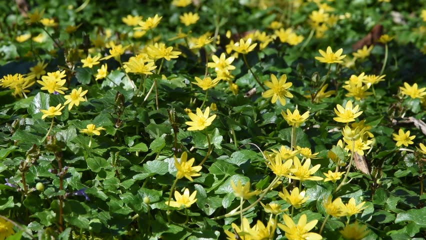Small yellow flowers in the woods stock footage video 15788842 small yellow flowers in the woods hd stock footage clip mightylinksfo