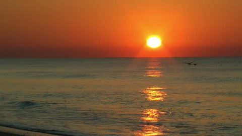 two birds fly across the rays of a beautiful ocean sunrise