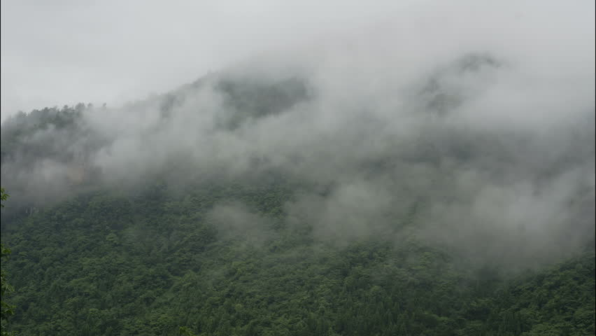 Timelapse of clouds over thick green forest in China. Ancient mountain cloudy time lapse drifting on Chinese forested hills on overcast rainy day. Cloudy mist billows across forest covered peaks.