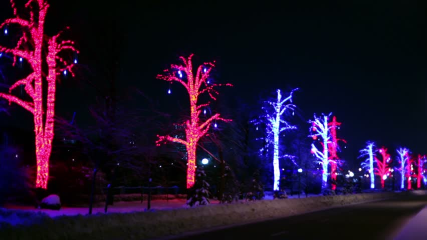 Trees are decorated with garlands stand along the road on which vehicles travel