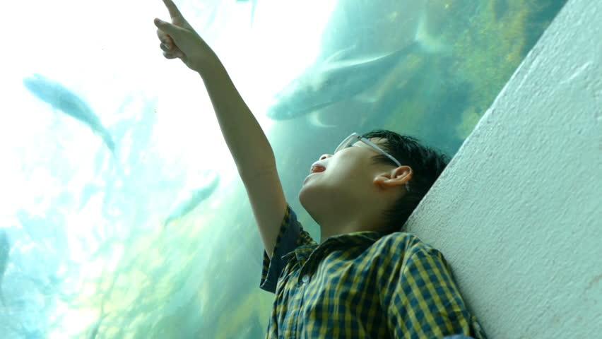 Young asian boy watching fish in aquarium