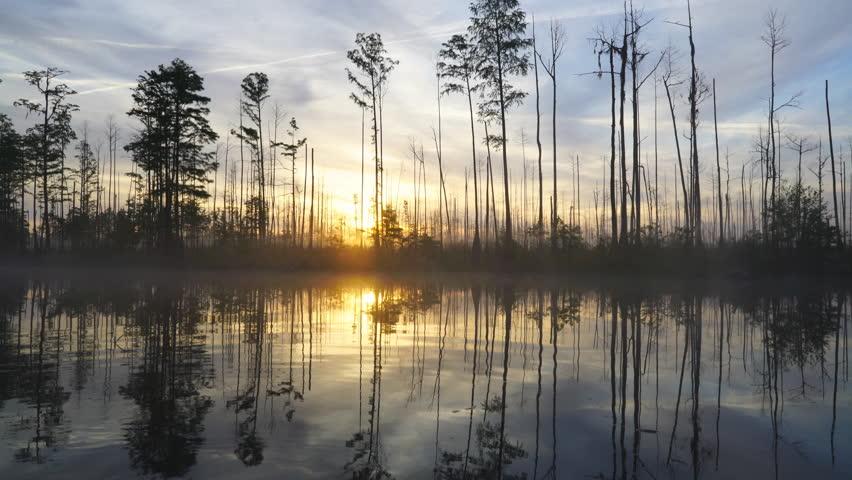 Cypress Swamp at Sunrise