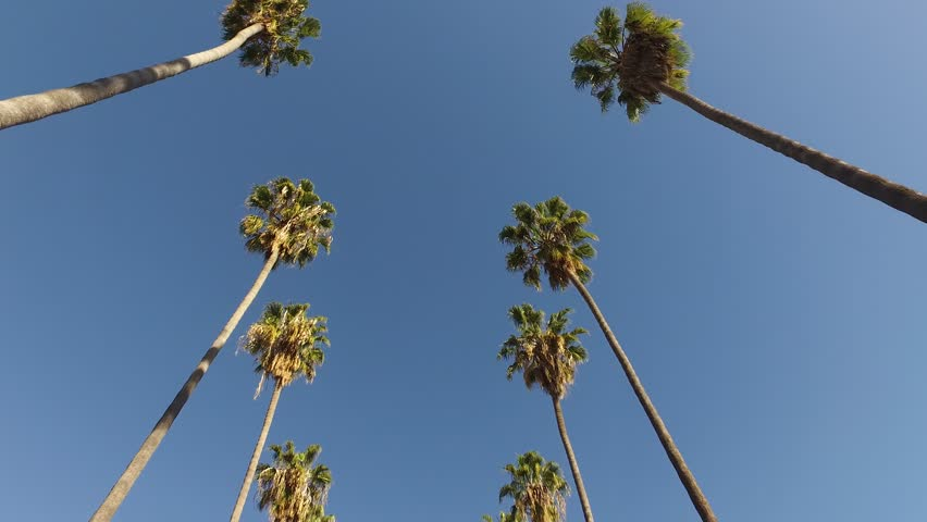 Palm Trees Double Line sky California Los Angeles palm trees