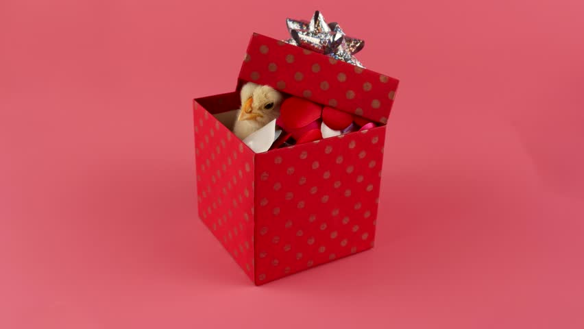 Valentines Day Gift Box With Stock Footage Video 100 Royalty Free