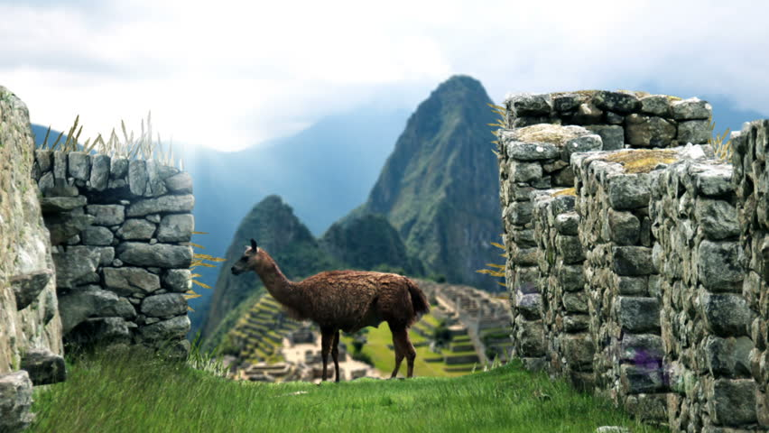 Machu Picchu - View From Behind Lama