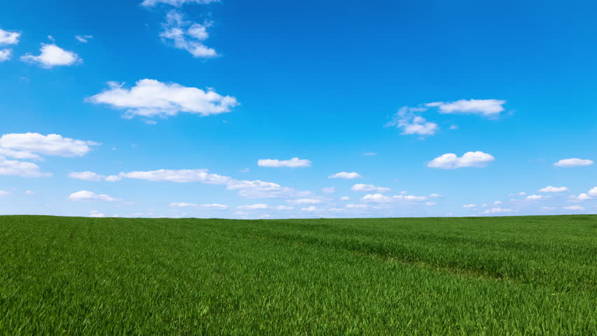 Beautiful Green Grass Clear Blue Sky Summer Landscape High