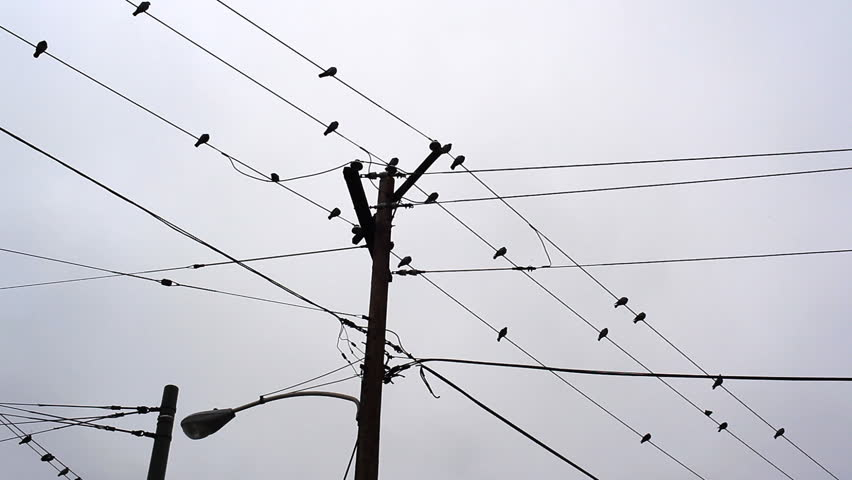 Pigeons Flying And On Telephone Wires Stock Footage Video 1694089 ...