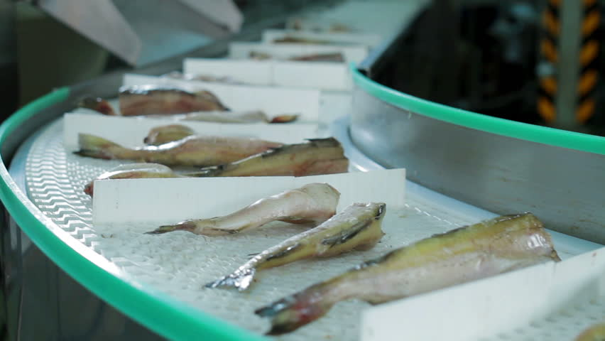 Seafood processing factory preparing fresh fish