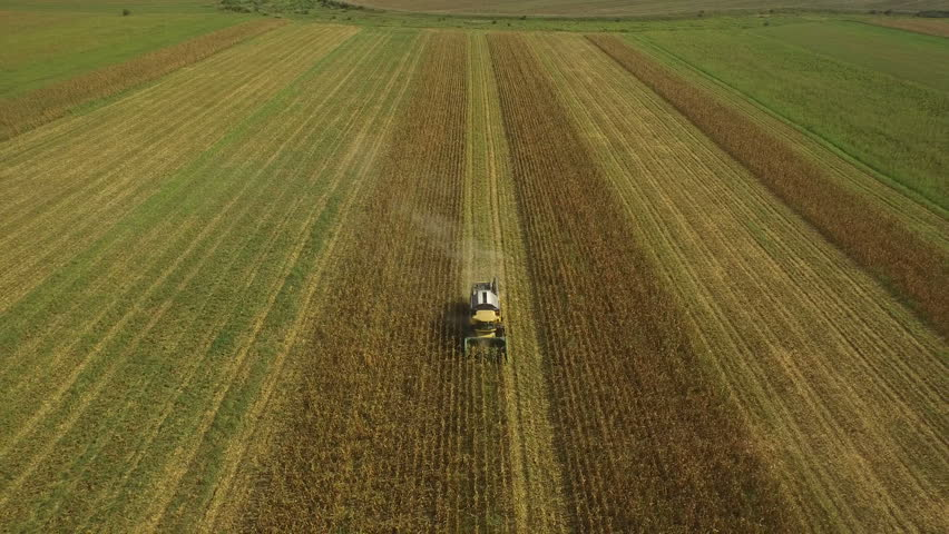 Aerial view of a combine tractor harvesting maize or corn at countryside #16971619
