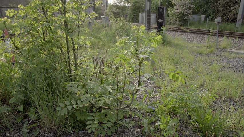 Urban town decay establishing shot UHD stock footage. Weeds left to overgrow in an unkept part of town depicting urban decay. #17263399
