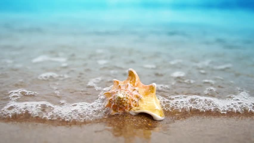 Sea Shells With Sand And Ocean Wave Background Stock Footage Video