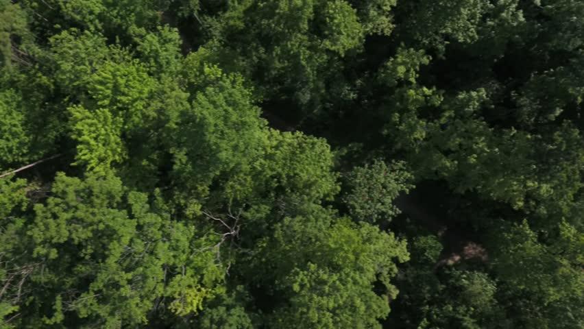 Forest flight    Shutterstock HD Video #17438809