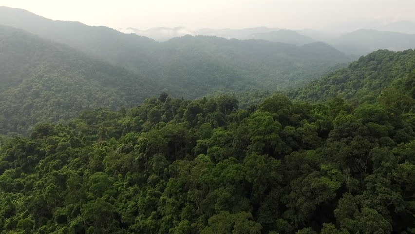 Aerial video above tropical forest in a sunny day   Shutterstock HD Video #17533504