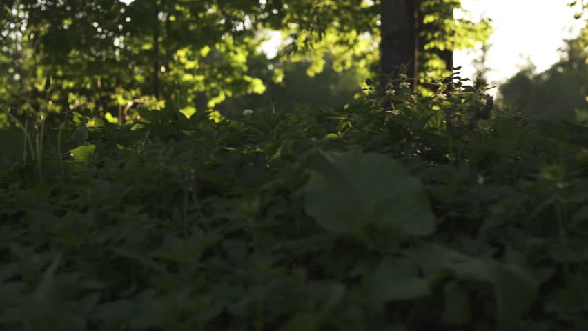 Wild grass in sunset light fast moving sideways with gimbal motion blur | Shutterstock HD Video #17558929