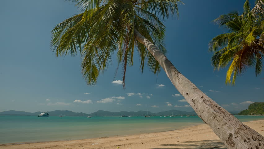 Summer day famous phuket island beach palm tree panorama hd thailand | Shutterstock HD Video #17565229