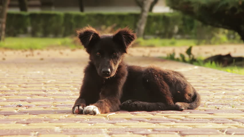 Homeless Dog Sitting in the Street