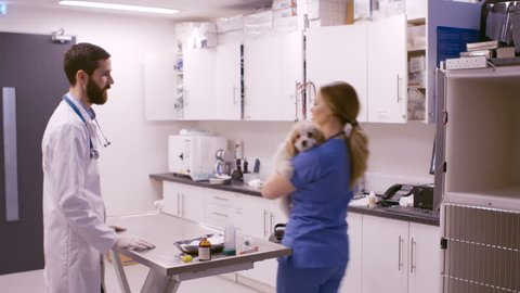 Vet examining the dog in a clinic