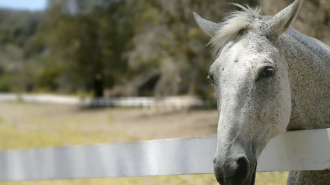 close up of the face of a horse moving her mouth from side to side over the fence in slow motion - 120 fps in HD resolution and 4:2:2 color space - saturated look - Leica SL