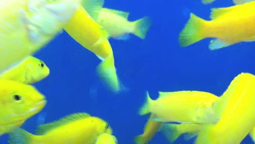 Blue and yellow, aquatic environment
