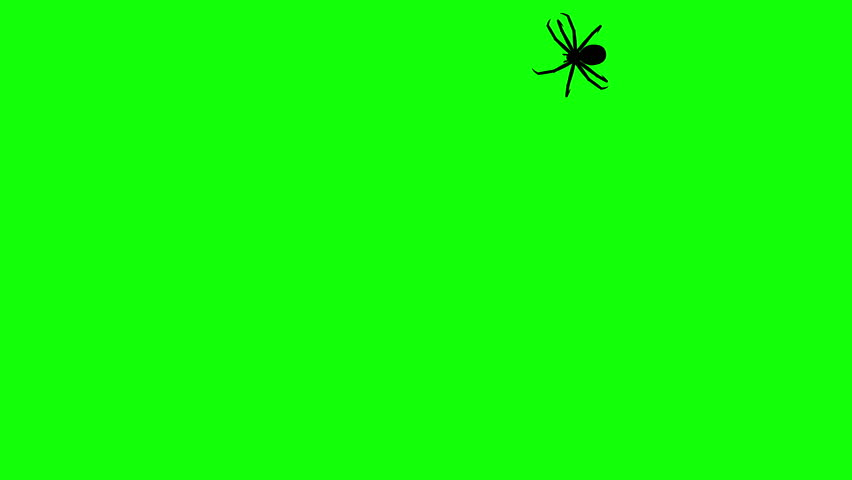 Spider on green screen, CG animated silhouette, seamless loop