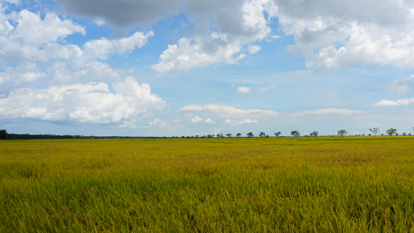 Stock video of barley field hyperlapse rotation timelapse lund hd0012timelapse of clouds sky over the green paddy field nature view ccuart Images