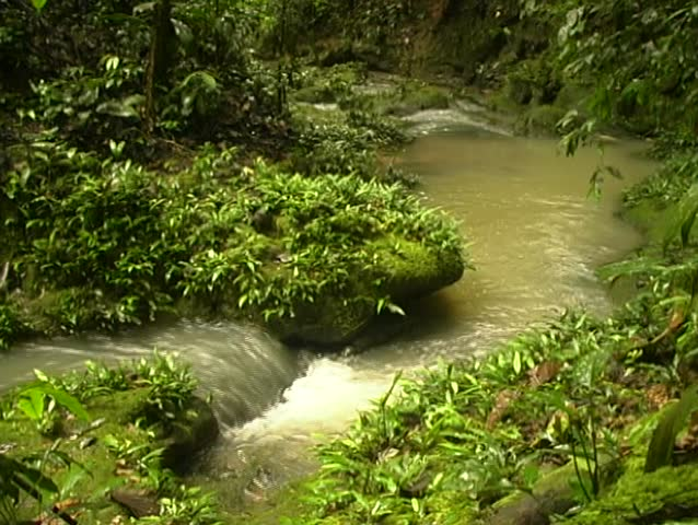 Rainforest stream in Ecuador