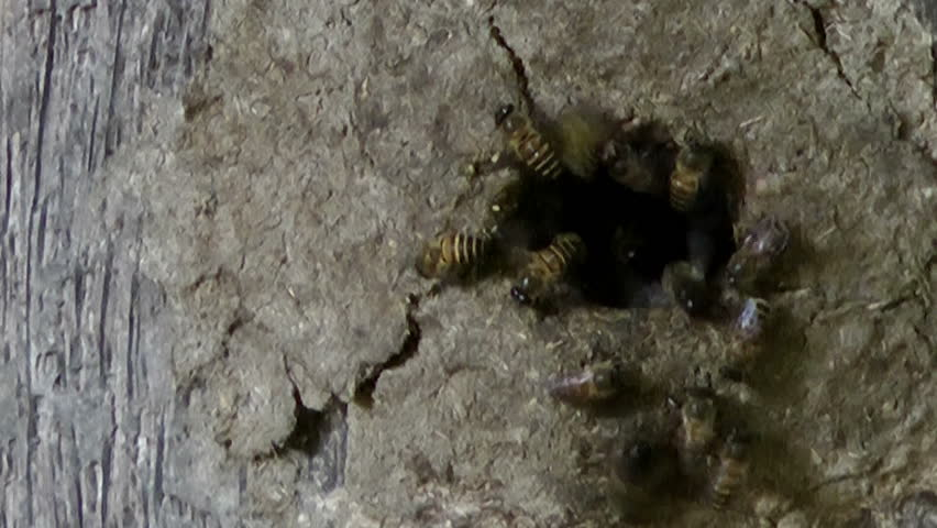 Bees entering/exiting a hive