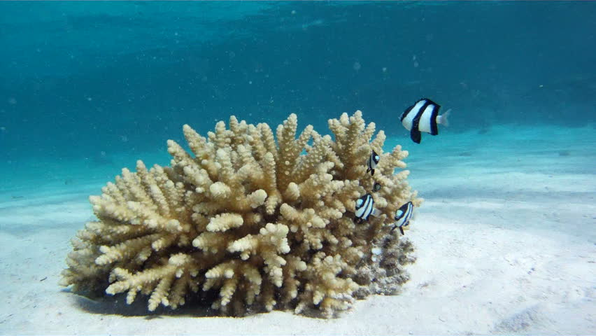 Young girl swimming underwater near the coral with fish in Red Sea.