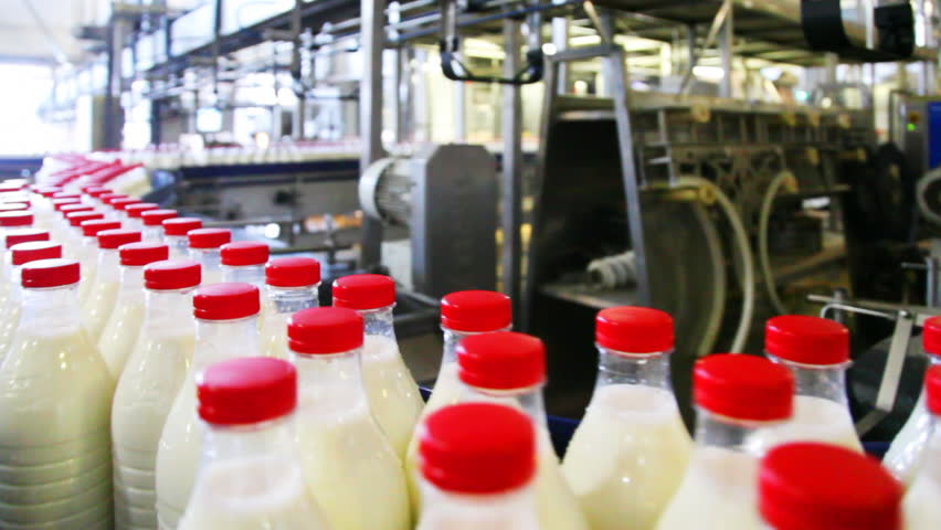 many bottles milk with red caps move wide conveyor belt at factory, panorama following their movement