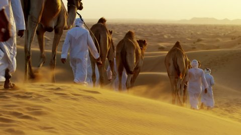 Aerial drone of Arab males in traditional dress leading camels through desert