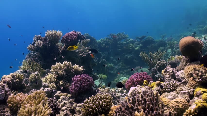 Underwater landscape of coral reef. Amazing, beautiful underwater marine life world of sea creatures in Red Sea. Scuba diving and tourism.