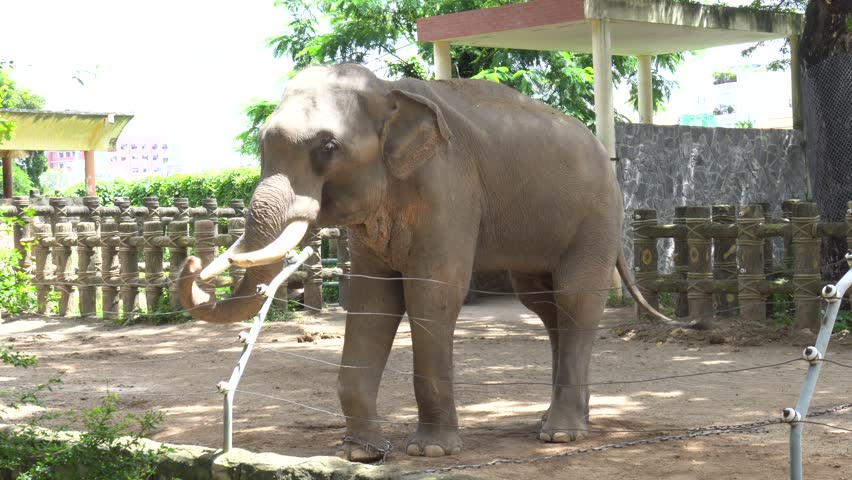 Dalmatian bitch pet dog taking a bath from owners in the porch of elephant in the zoo 4k stock video clip sciox Image collections