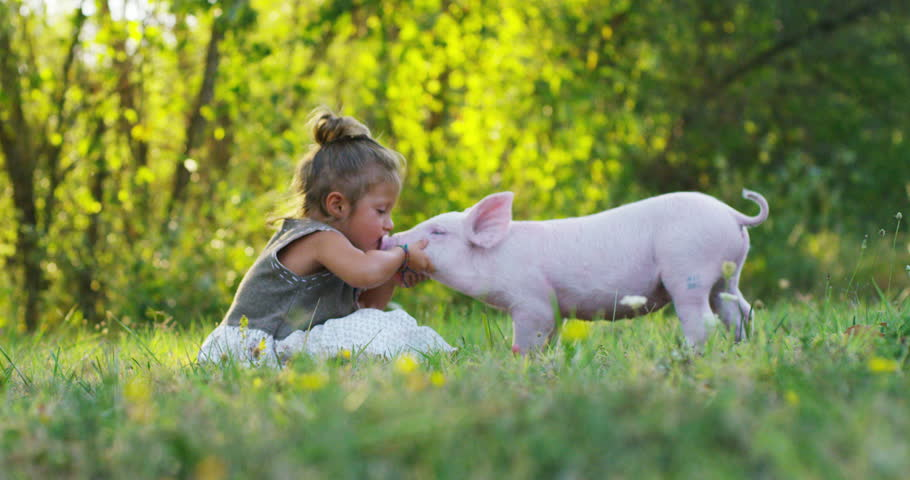 girl caresses and kisses a pig in green world. sustainability and a love of nature, respect for the world and love for animals. concept of vegan or vegetarian. connection to the world. puppy