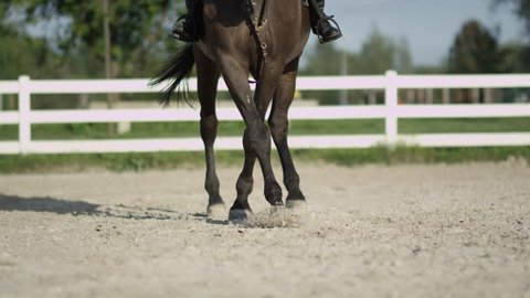 SLOW MOTION, CLOSE UP, DOF: Strong powerful dark brown dressage horse riding traver in big sandy manege. Female dressage rider and horse doing a leg-yield haunches-in element in outdoors riding arena