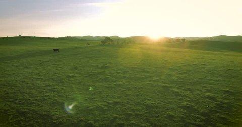 Sunset over lushes green grass on an Australian cattle farm
