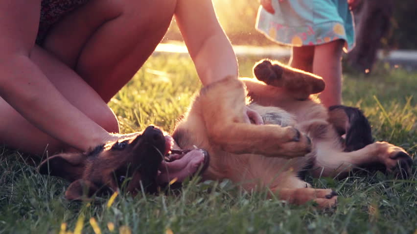 Excite puppy dog rolling on grass while unidentifiable child tickles him under his legs