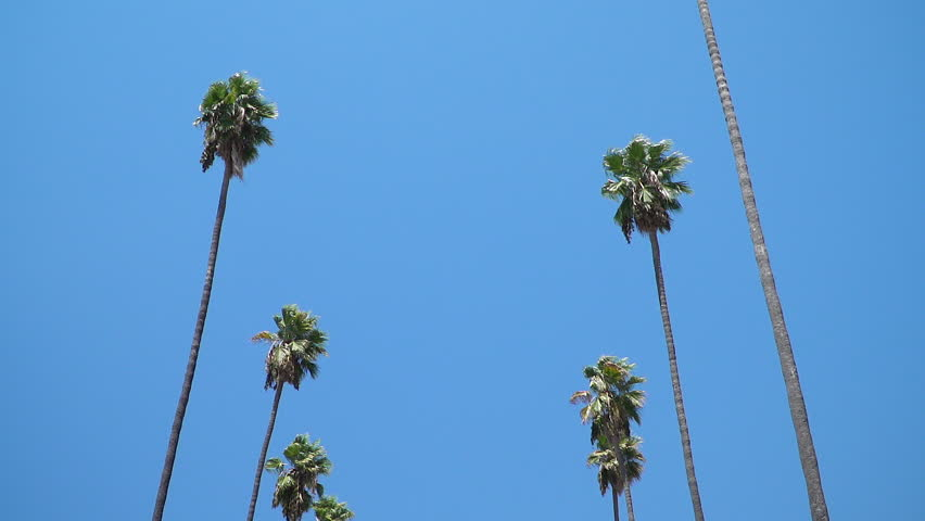 Looking up and a blue sky with palm trees passing by