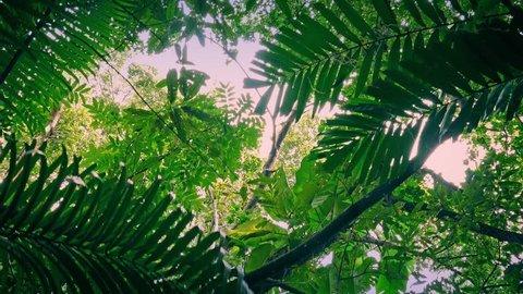 Moving Under Jungle Plants At Sunrise