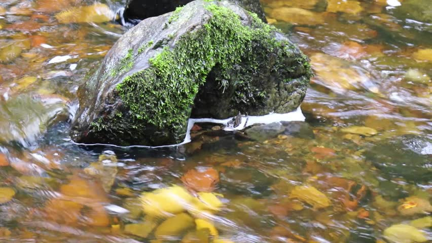 flod i wales