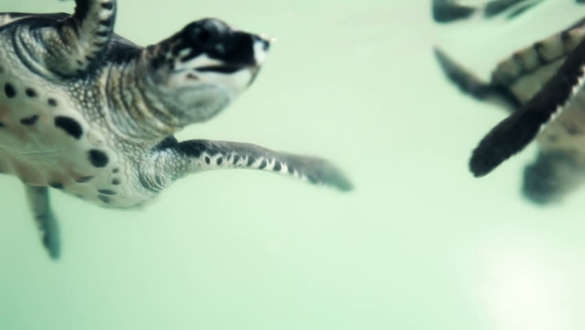 Stock video of close up of baby sea turtle 1988779 shutterstock publicscrutiny Image collections