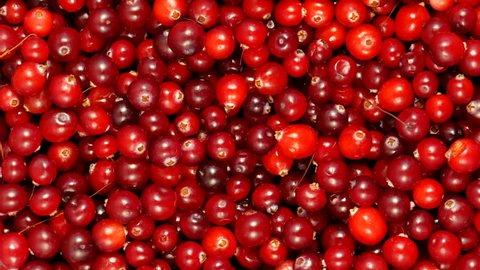 4k Cranberry berries seamless rotation