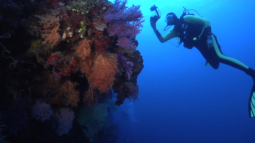 Photographer with strobe flash taking images, photographing on deep wall with Rainbow hanging soft coral in Fiji Islands, HD, UP16796 | Shutterstock HD Video #19969036