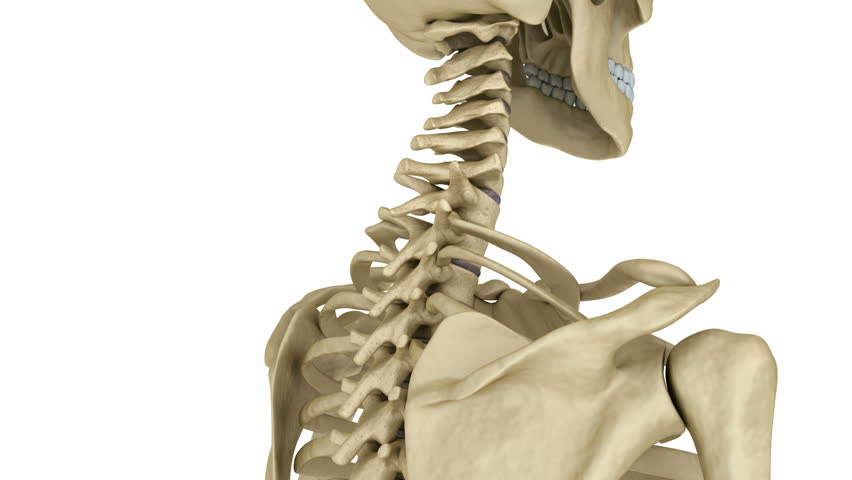 Cervical Spine Anatomy  Human Skeleton  Stock Footage Video (100%  Royalty-free) 19981819 | Shutterstock