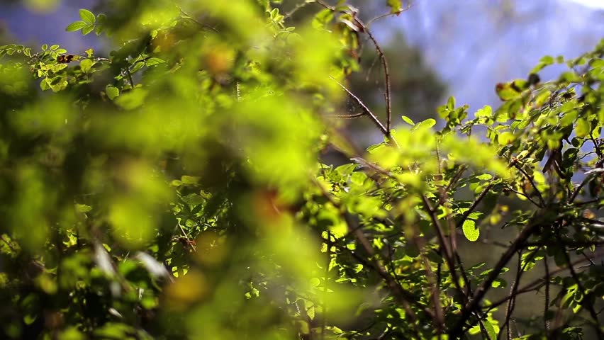 branch with green