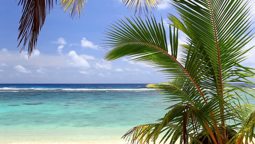 Waves on a tropical beach with palm tree