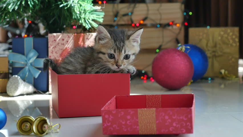 Cute tabby kitten playing in a gift box with Christmas decoration | Shutterstock HD Video #20207560