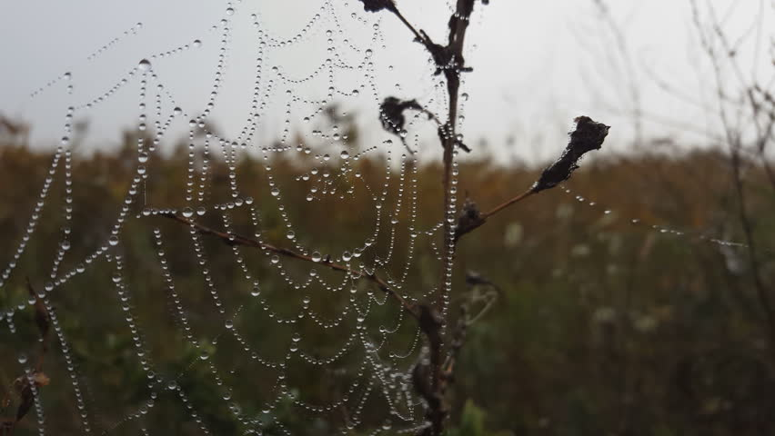 Spider web with dew drops in the morning. Macro shot. | Shutterstock HD Video #20209219