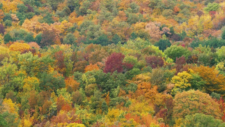 Image result for forest autumn top view