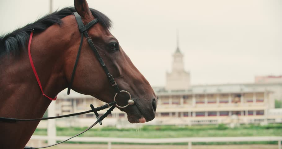 thoroughbred race horse brown close-up face in the background of a running track, slow motion #20245213